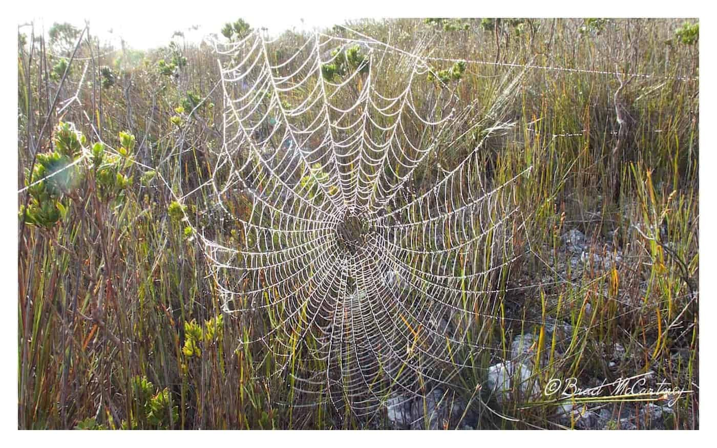 Early morning makes it easy to spot the spiders webs