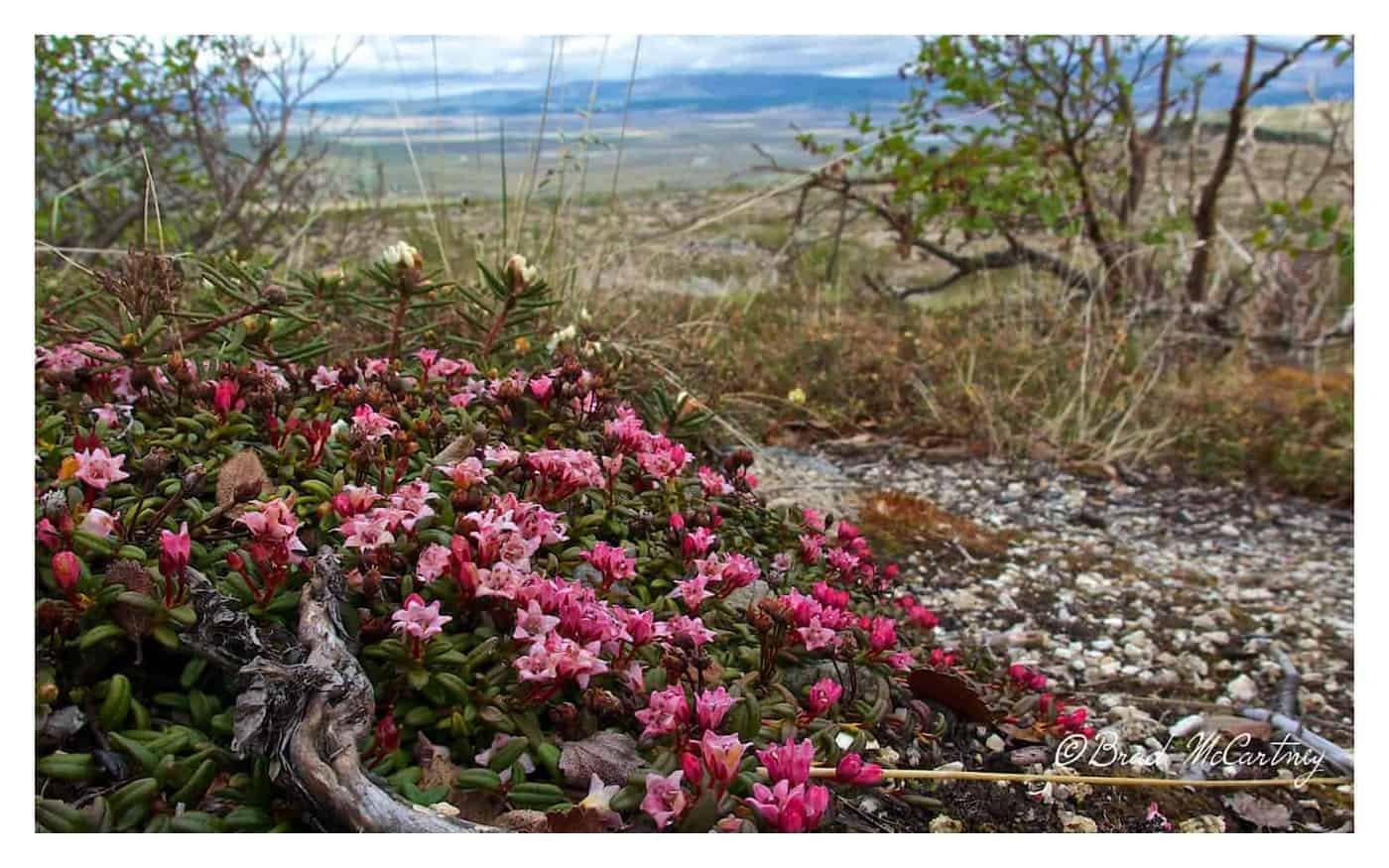 flowers dalton highway