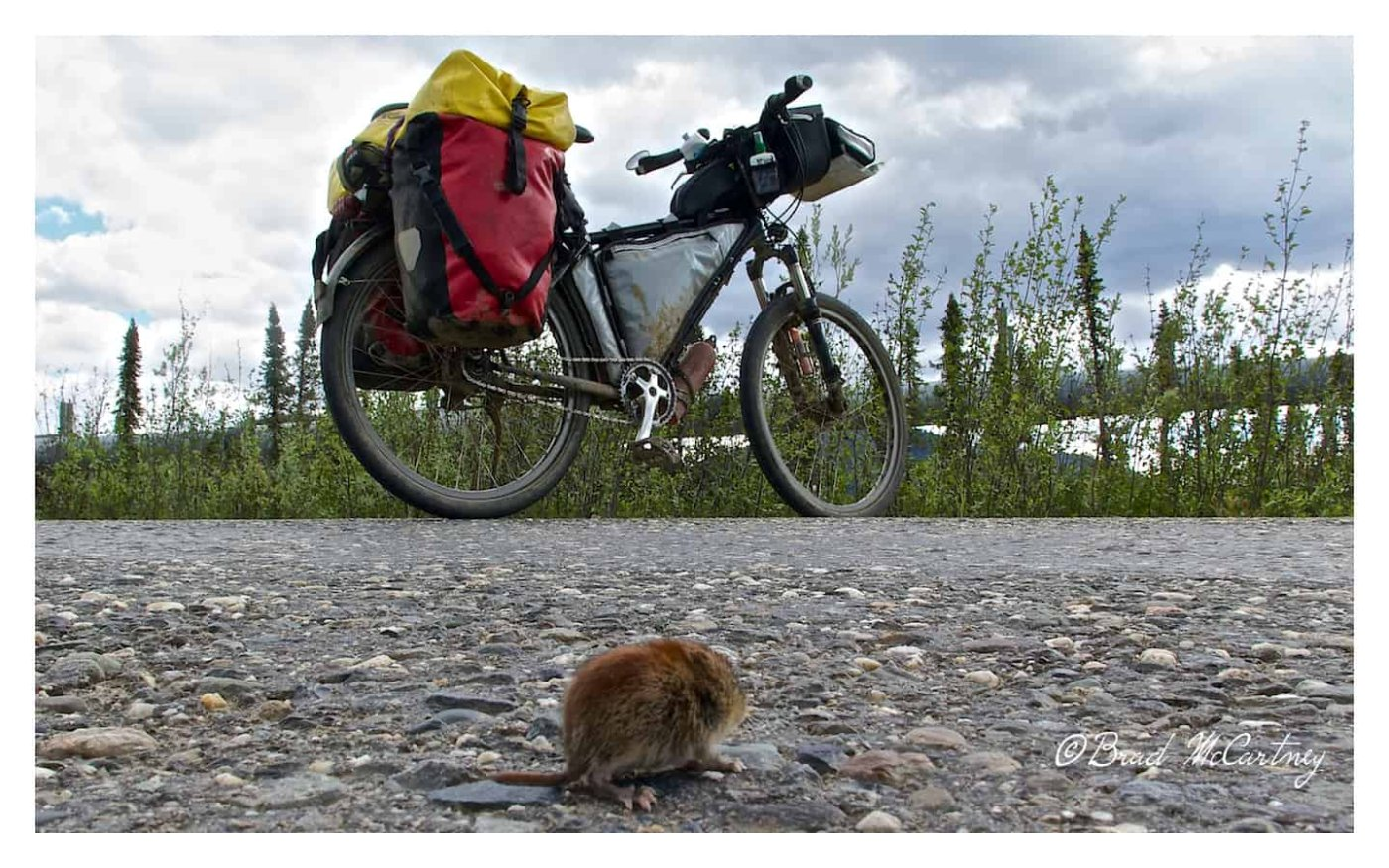 Critter warming up on the road