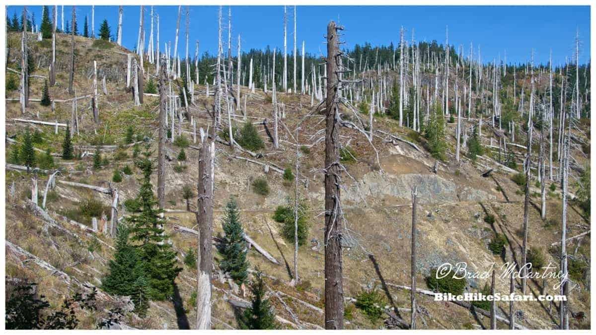 Trees inside the 'blast zone'