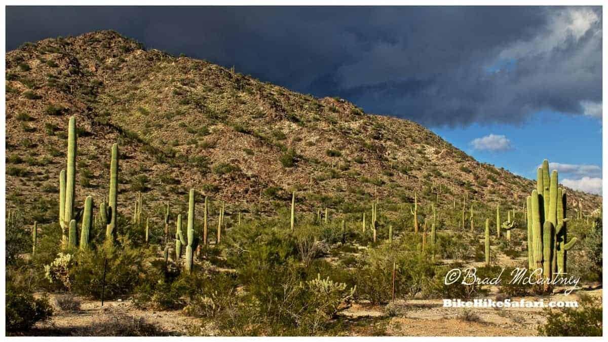 Sanoran Desert with its Saguero Cactus