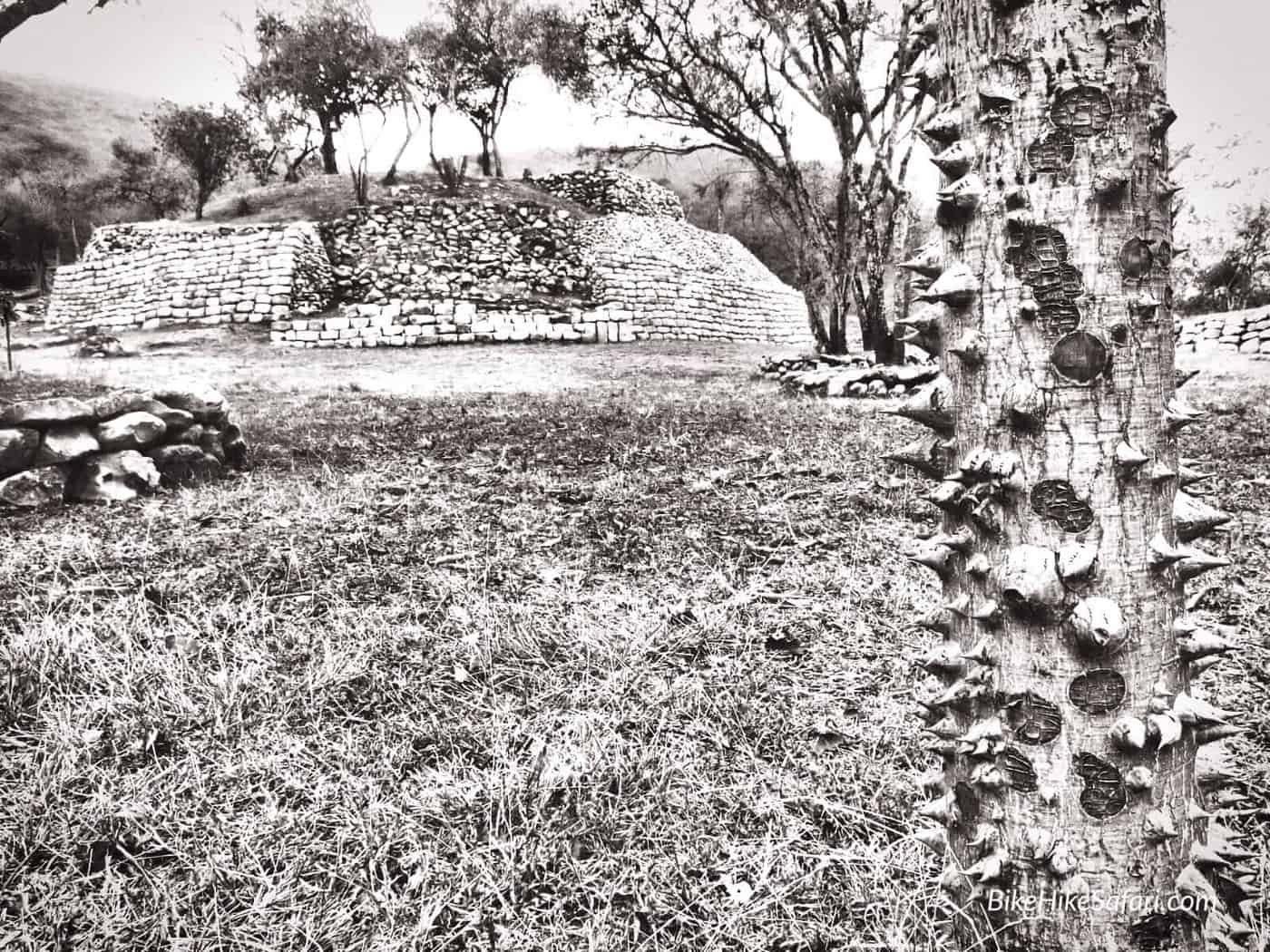 Bombax Trees