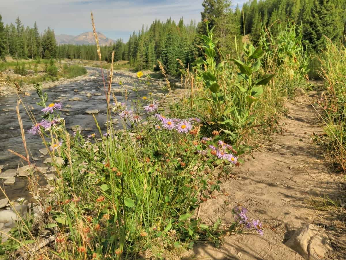 yellowstone national park hiking trail