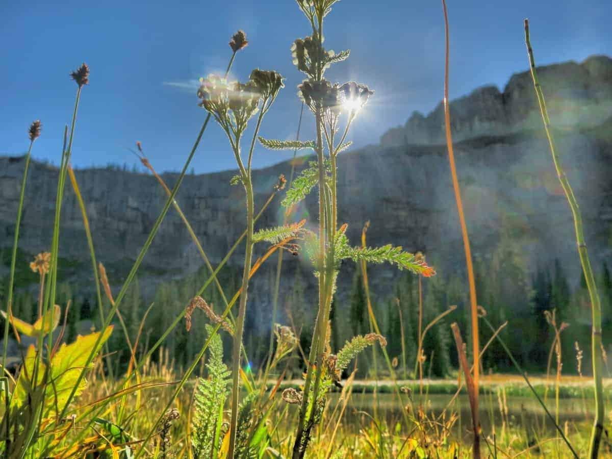 The Chinese Wall Bob Marshall Wilderness Montana