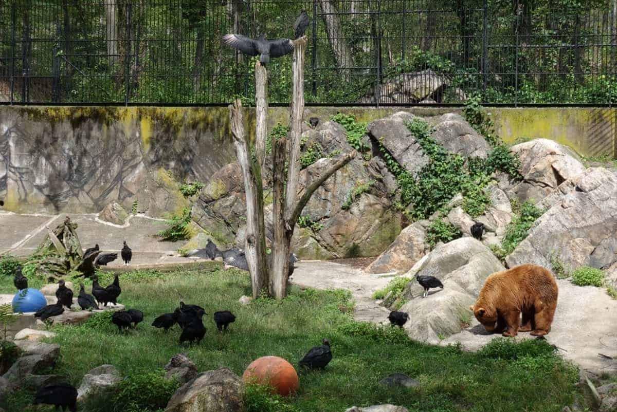 trailside zoo on the appalachian trail