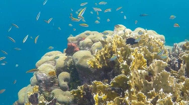 Snorkelling san blas islands
